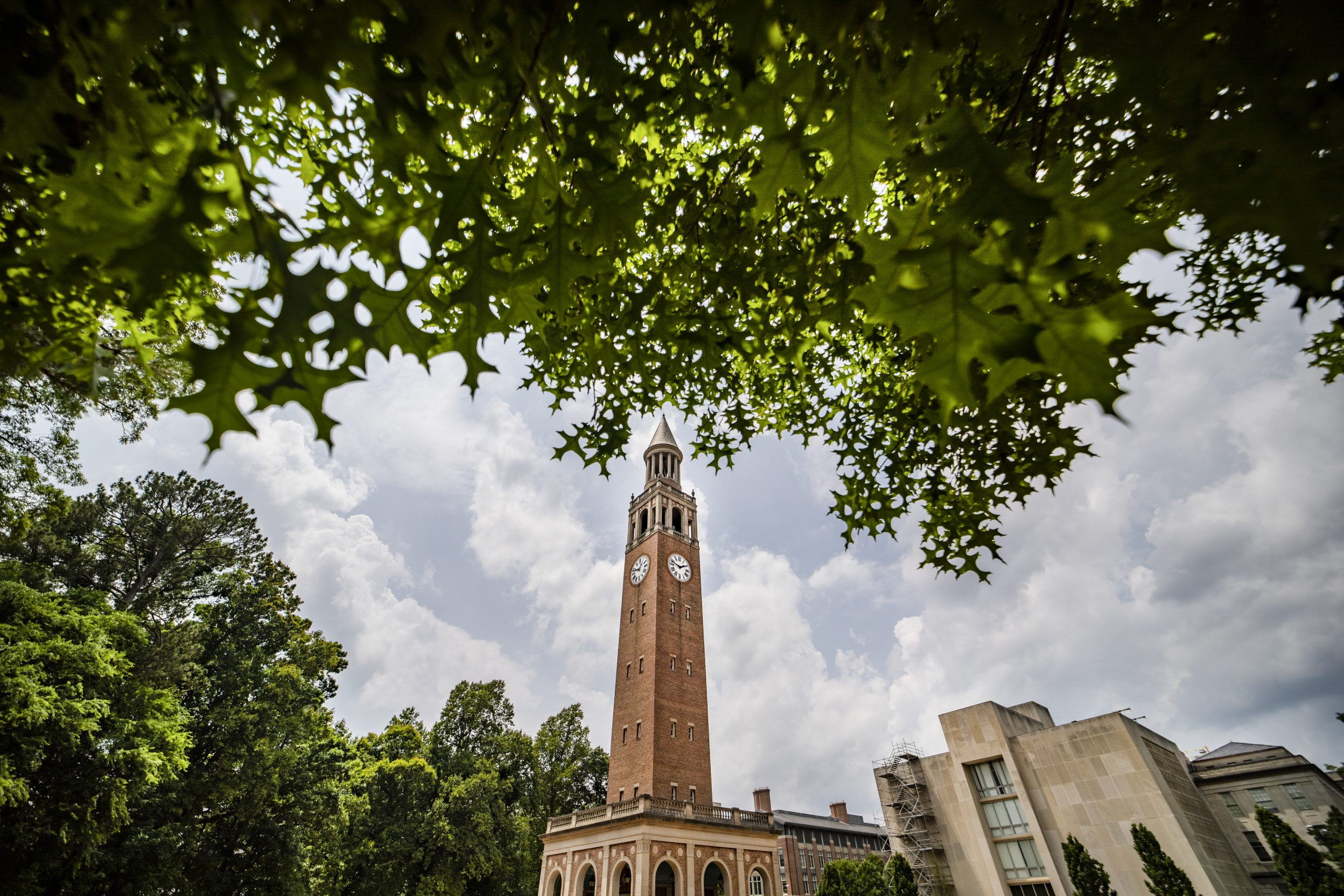 The Bell Tower is framed by leaves from a tree