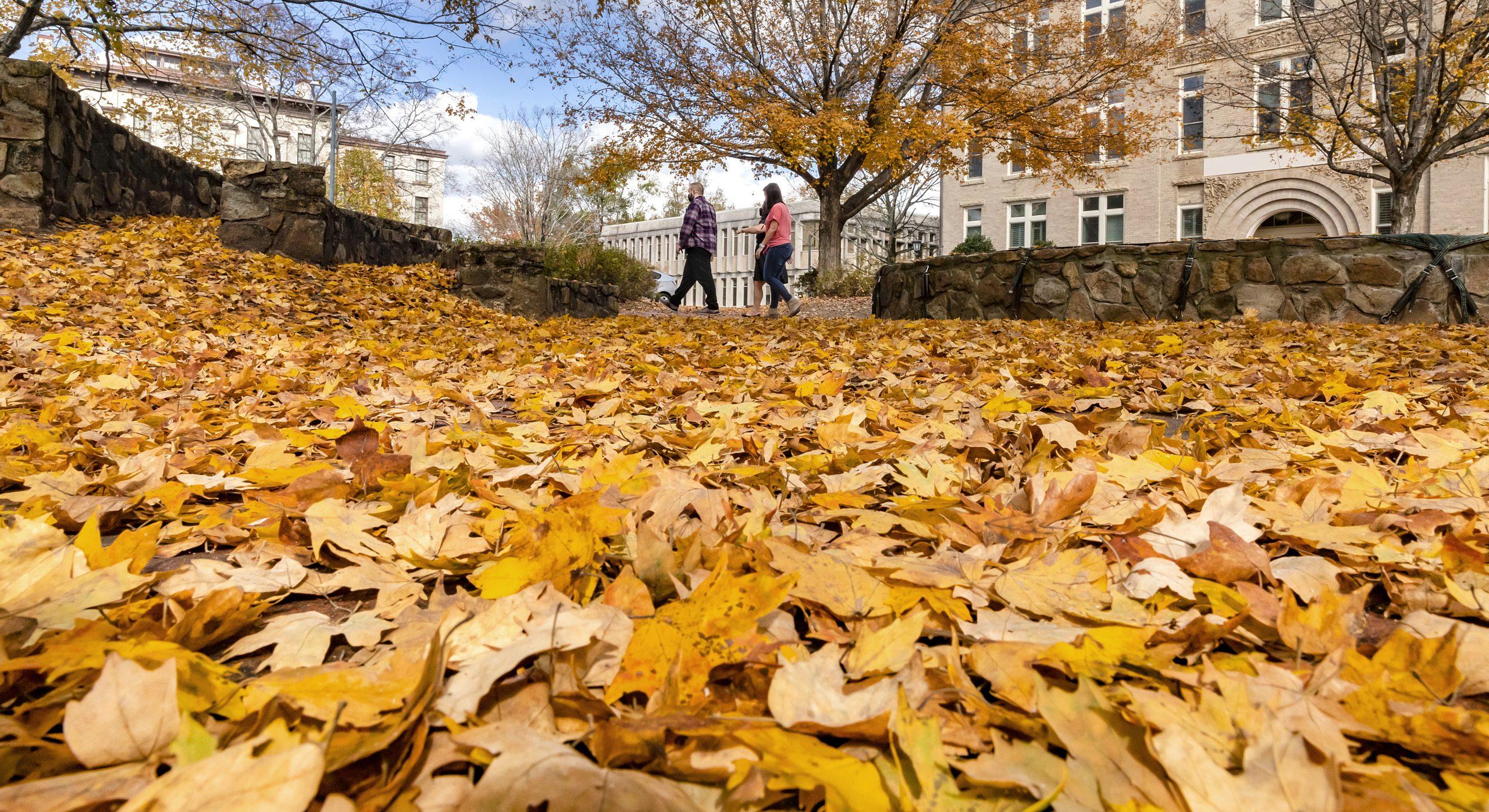 Fall leaves on campus sidewalk.